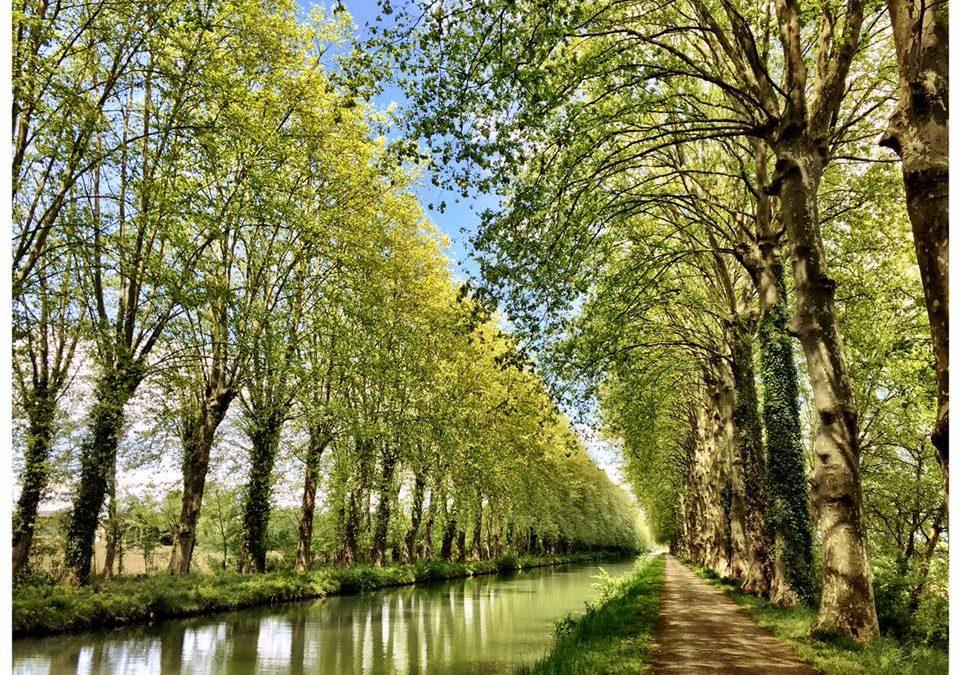 The canal at Damazan by Colin Usher